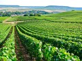 Private Day in Champagne - Minibus and National Licenced Guide