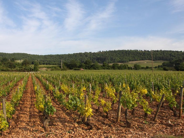 Burgundy Wine tours Super stay Comfort, 2 Days Tours and 2 nights at 4* Hotel Le Cep