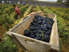 BURGUNDY WINE TOURS - 1 DAY
