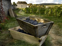 PRIVATE BURGUNDY WINE TOURS - 1 DAY