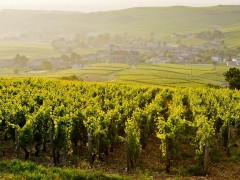 PRIVATE BURGUNDY TOURS - 2 DAYS & +